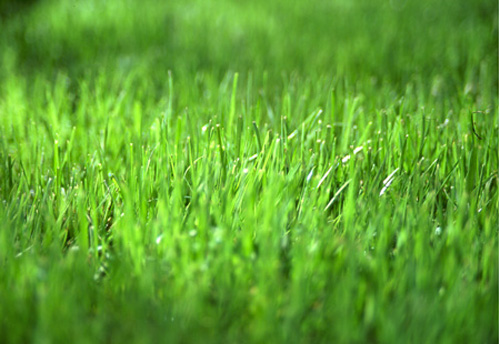 why is the grass green on Read this miscellaneous essay and over 88,000 other research documents why is the grass green on the other side have you ever looked at your neighbors' lawns and wondered how they keep.
